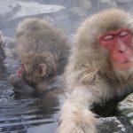 永山竹取の湯の口コミ雑感(東京で最も岩盤浴が豊富なスパ・健康ランド)